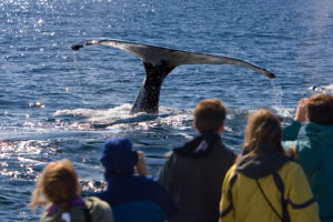 People watching a whale tail from a wale watching boat